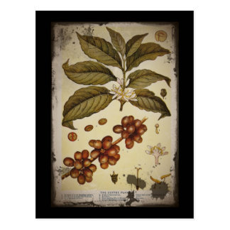 Retro Botanical Image Coffee Postcard