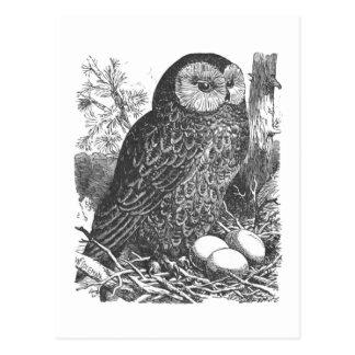 Retro brooding owl drawing postcard