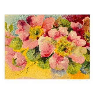 Retro Chic Elegant Pink Vintage Floral Primroses Postcard