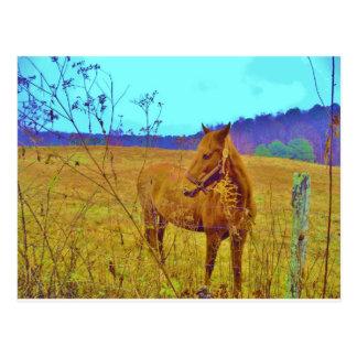 Retro Colored Horse Postcard