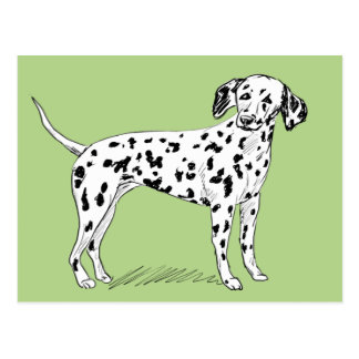 Retro Dalmatian Sketch Looking Aside Postcard
