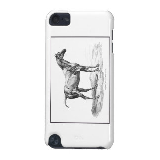 Retro horse muscle anatomy picture iPod touch (5th generation) cover