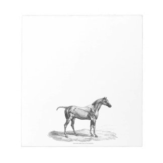 Retro horse muscle anatomy picture notepad