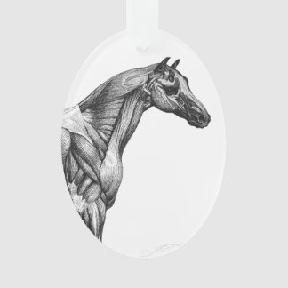 Retro horse muscle anatomy picture ornament