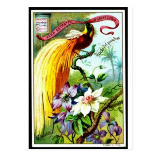 Retro Paradise Bird Postacard Postcard