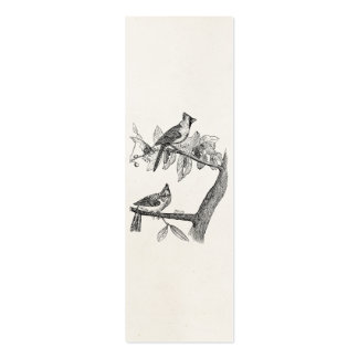 Retro personalizada pájaro del pájaro cardinal del tarjetas de visita mini