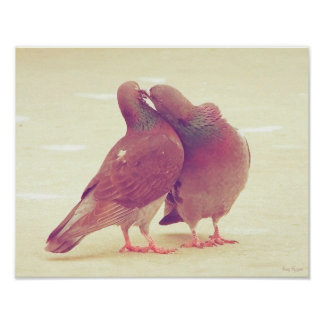 Retro Pigeon Love Birds Kissing Couple Photo Poster
