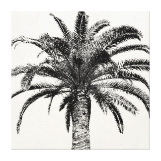 Retro Tropical Island Palm Tree in Black and White Canvas Print