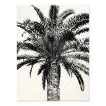 Retro Tropical Island Palm Tree in Black and White Photo Print