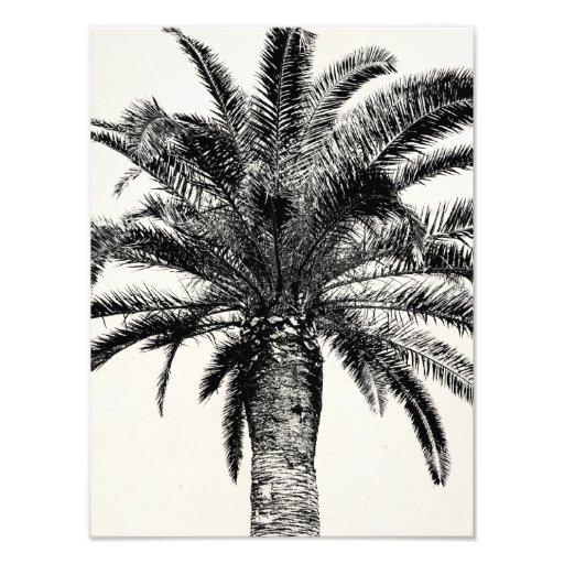 Retro Tropical Island Palm Tree in Black and White Photo Art