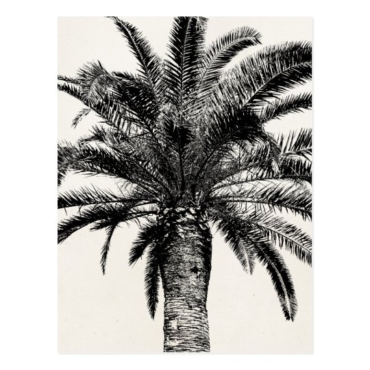 Palm Tree Island: Retro Tropical Island Palm Tree In Black And White