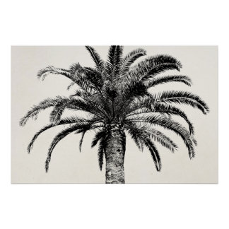 Retro Tropical Island Palm Tree in Black and White Poster
