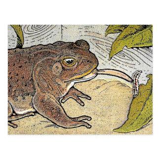 Retro Vintage Frog Book Illustration Postcard