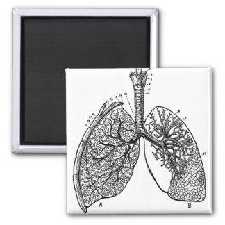 Retro Vintage Kitsch Anatomy Medical Lungs Magnet