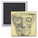 Retro Vintage Kitsch Medieval Skull Illustration Magnets