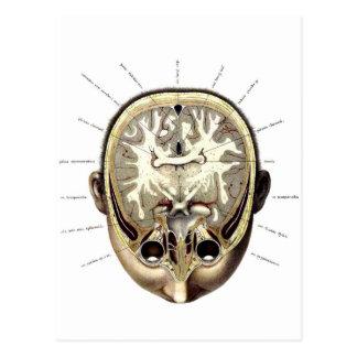 Retro Vintage Kitsch Monster Anatomy Exposed Brain Postcard