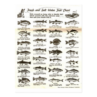 Retro Vintage Men's Fishing Chart - Post Cards