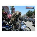 Reunión 2013 de la motocicleta de Hollister Tarjeta Postal