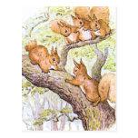 Reunión de la ardilla tarjeta postal