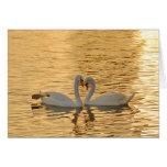 Reunión de los pares del cisne en la fotografía de tarjetas