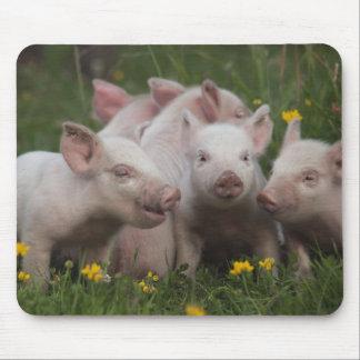 Reunión de los tres pequeños cerdos alfombrillas de raton