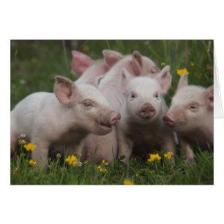 Reunión de los tres pequeños cerdos tarjeta de felicitación