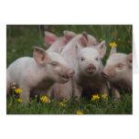 Reunión de los tres pequeños cerdos tarjetas