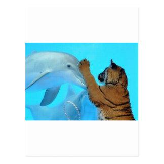 Reunión del delfín y del tigre tarjeta postal