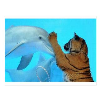 Reunión del delfín y del tigre tarjetas postales