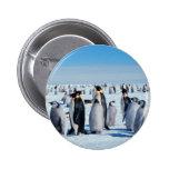 Reunión del pingüino