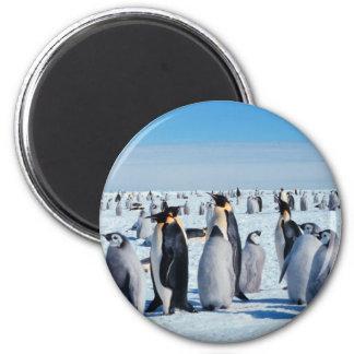 Reunión del pingüino imán redondo 5 cm