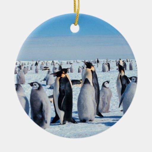Reunión del pingüino ornamentos para reyes magos