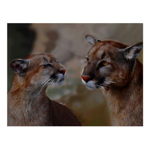 Reverencia de los leones de montaña tarjetas postales