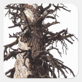 Revestimiento esquelético del árbol pegatina cuadrada