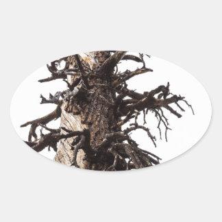 Revestimiento esquelético del árbol pegatina ovalada