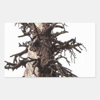 Revestimiento esquelético del árbol pegatina rectangular