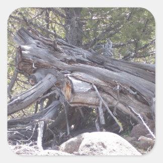 Revoltijo de la madera del envejecimiento pegatina cuadrada