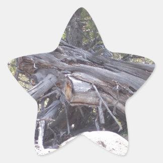 Revoltijo de la madera del envejecimiento pegatina en forma de estrella