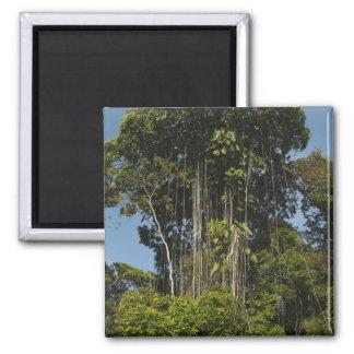Rewa River edge Rainforest Guyana Magnet