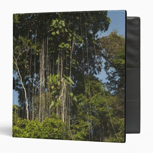 Rewa River edge Rainforest Guyana Vinyl Binders