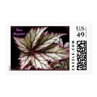 Rex Begonia Postage Stamp