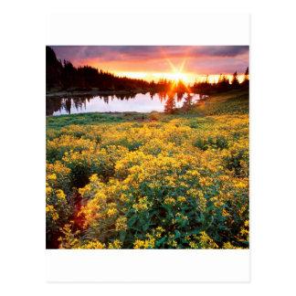 Rey Basin San Juan Colorado del oro de la puesta Tarjetas Postales