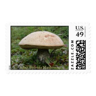 Rey Boletus Mushroom en la isla de Unalaska Franqueo
