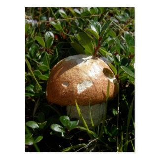 Rey Boletus Mushroom, isla de Unalaska Tarjetas Postales