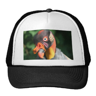 Rey buitre gorros