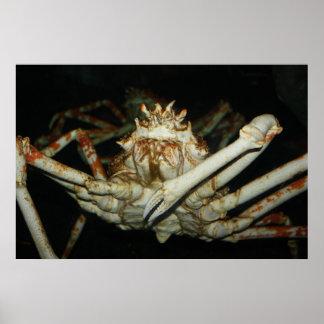 Rey cangrejo póster