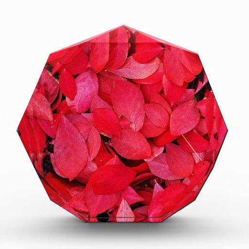 Rey color de rosa precioso de los pétalos rojos co