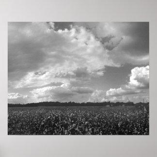 Rey Cotton Landscape Black y impresión del poster