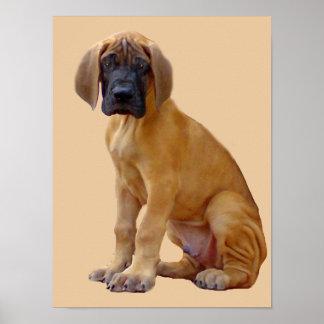 Rey de great dane de la impresión de los perros poster