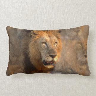 Rey de la almohada de la selva